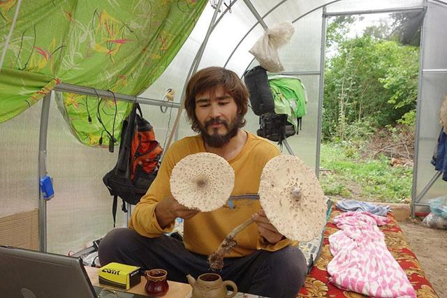 Дары леса, грибы зонты.