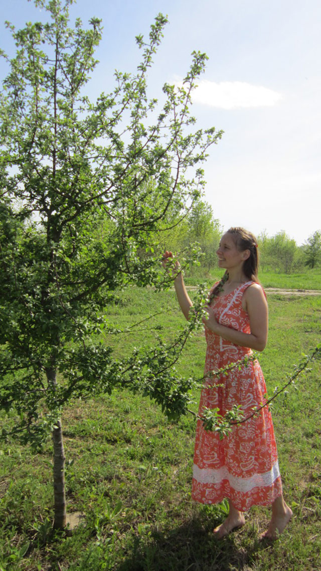 Яблонька-дичка