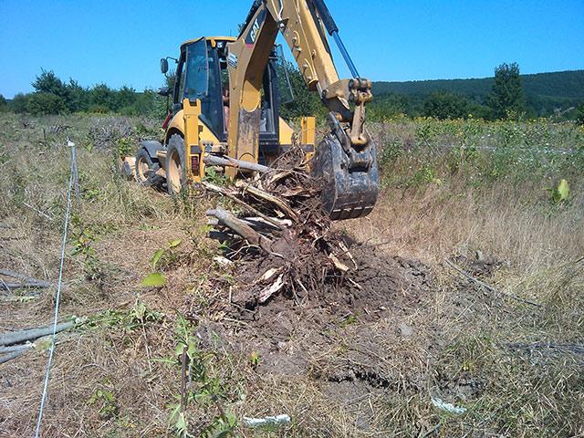 Выкорчевывание деревьев трактором