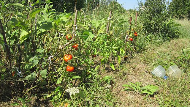 Огород в родовом поместье