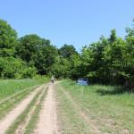 дорога от общей поляны в сторону 2, 3, 4 полян